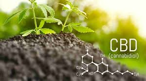 Why Is CBD Known As The Regular Treatment?